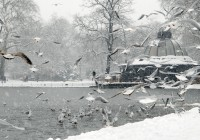 Frozen-Pond_o