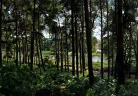 Latitude-Trees_o
