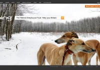 Bing_The-Retired-Greyhound-Trust_Help-your-Britain_Campaign_e